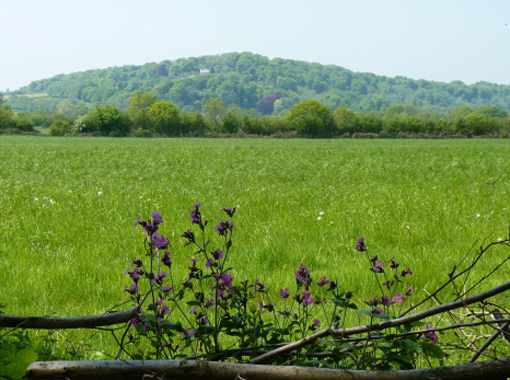 a field with a forest in the background and purple flowers in the foreground