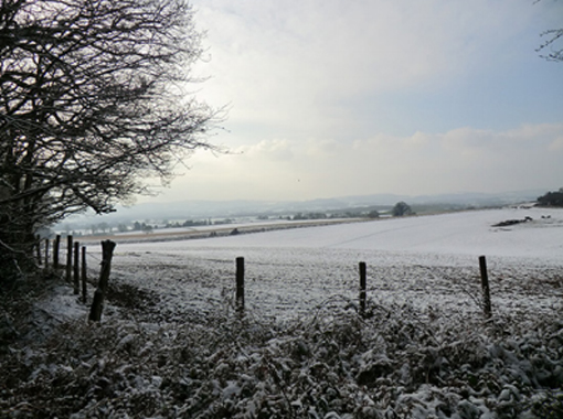 a field behind a fence covered in snow with a tree on the left of the frame